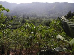 Hills around Kyarumba